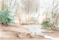 Le Teich - Les canards Aquarelle (24*30) encadré - 50 €